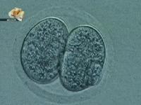Первое клонирование человека / BBC: Cloning the first human (2005) TVRip