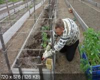 Минимум работы, максимум урожая! (2015)