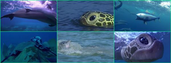 Дельфины. Шпион в стае / Dolphins. Spy In The Pod (2014)