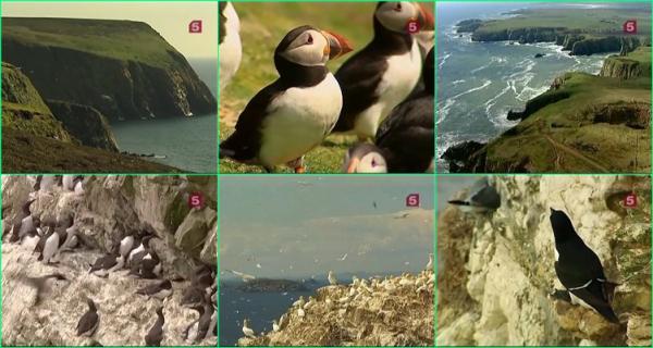 Спасение морских птиц / Saving Our Seabirds (2009)