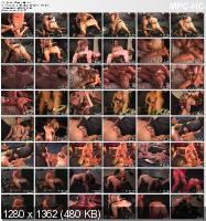 A T@ste 0f T0rture (2010/DVDRip)