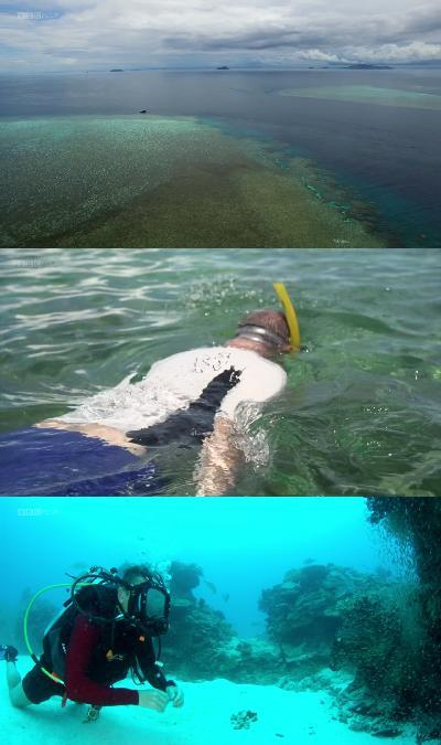 Bbc Wonders Of The Great Barrier Reef 1080P Hdtv X265 Aac